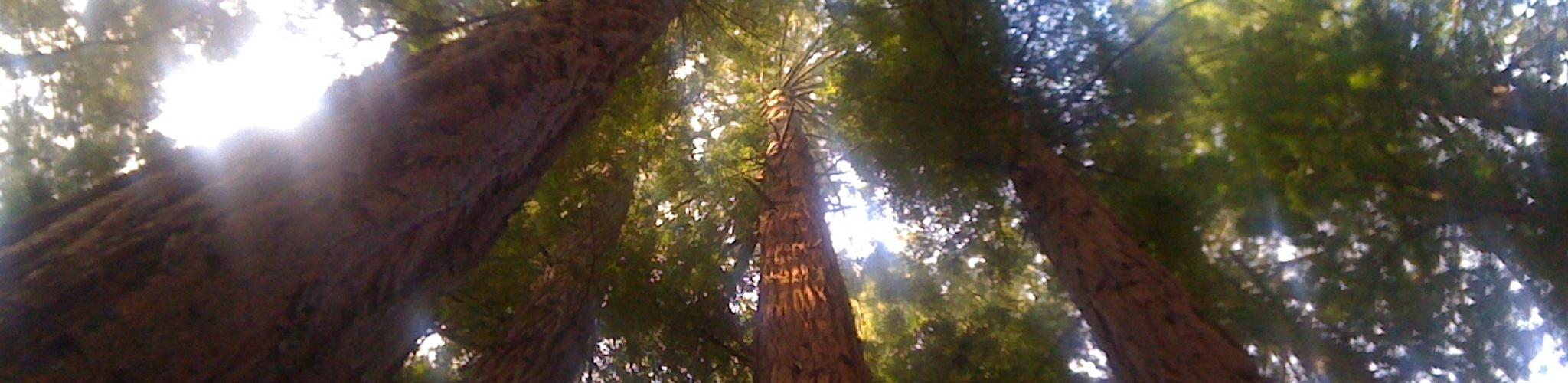 Redwood_Banner.jpg